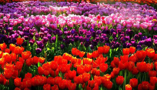 การปลูกพันธุ์ไม้ดอกไม้ประดับ